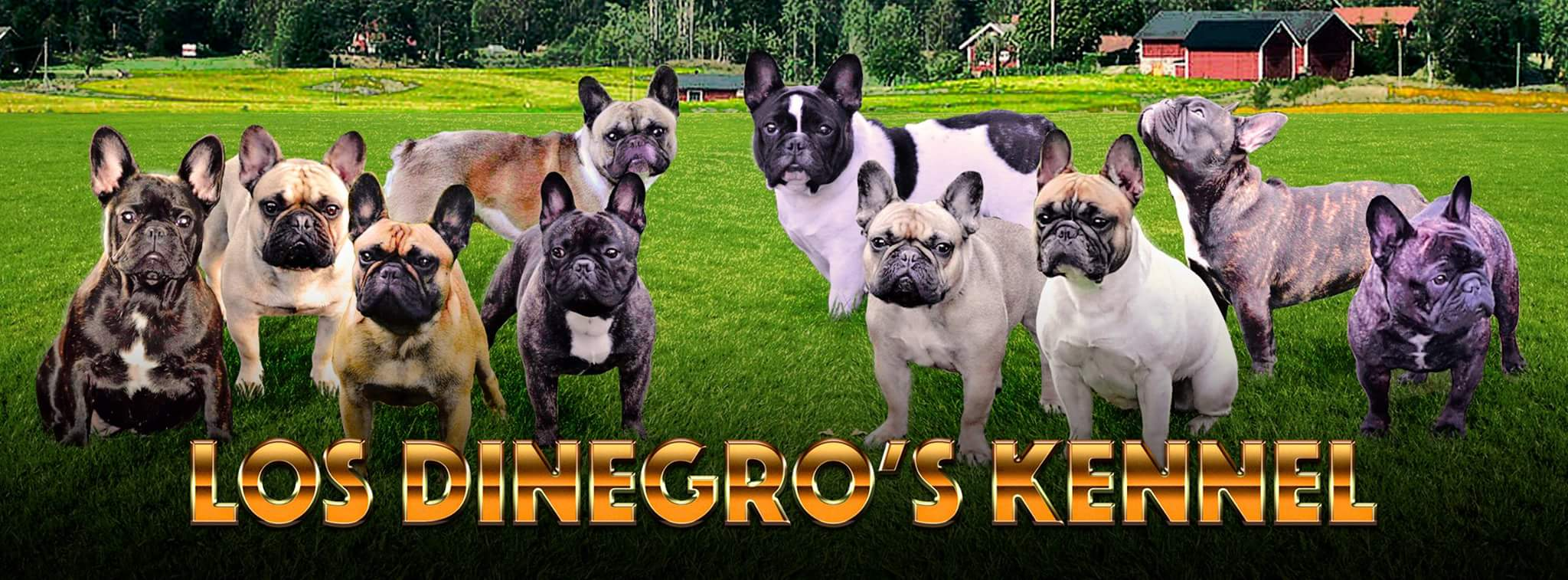 Los Dinegro's Kennel